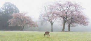 deer in the mist